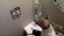Une souris se cache dans un interrupteur pour échapper à un chien