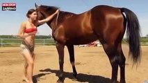 Quand une fille sexy essaye de grimper sur un cheval (Vidéo)