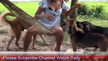 Pretty Girl Give Spacial foods For dogs Dogs Waiting Eat More Foods - Watch Daily