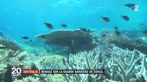 Australie : le triste déclin de la Grande Barrière de corail