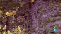 Documental Loba blanca 2- La manada del Gran cañon,DOCUMENTAL 2018