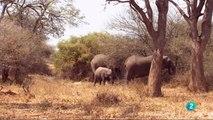Documental Africa salvaje 1- Los elefantes de Mashatu,ANIMALES  SALVAJES,AFRICA,ELEFANTES,NATURALEZA