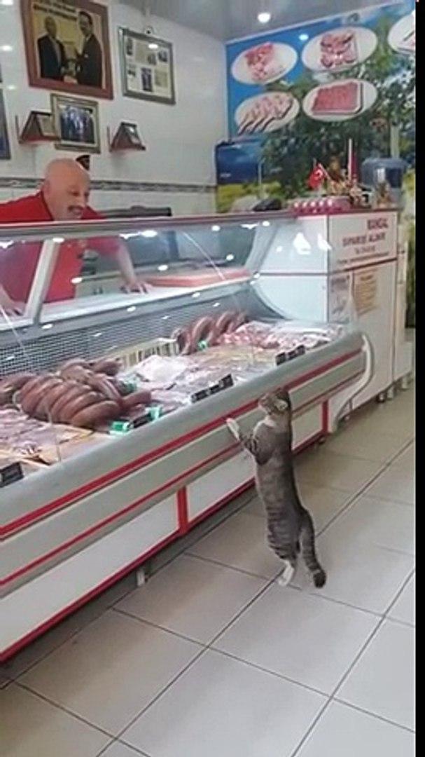 Un chat fait ses courses chez le boucher