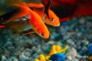 Les poissons les plus populaires en France