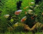 Tout savoir sur les poissons tropicaux