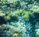 Tout savoir sur les coraux pour votre aquarium