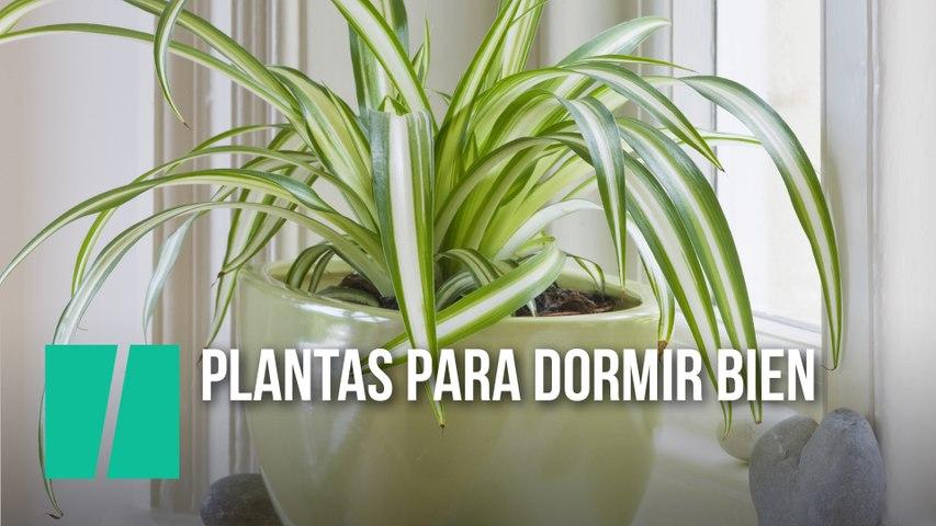 Plantas que te ayudarán a dormir mejor