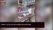 Turquie : Un chat fait ses courses chez un boucher, les images insolites (Vidéo)
