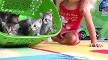 Наши КОТЯТЯ. Видео Для Детей. Смешные Животные для Детей