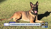 Fundraiser Saturday in honor of fallen Phoenix Police K-9 Bane