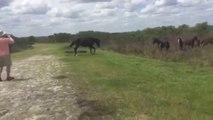 Un cheval sauvage s'en prend à un alligator
