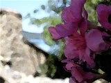 mes plus belles photos de fleurs