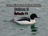 Les animaux en farandole: saison 3: épisode 3