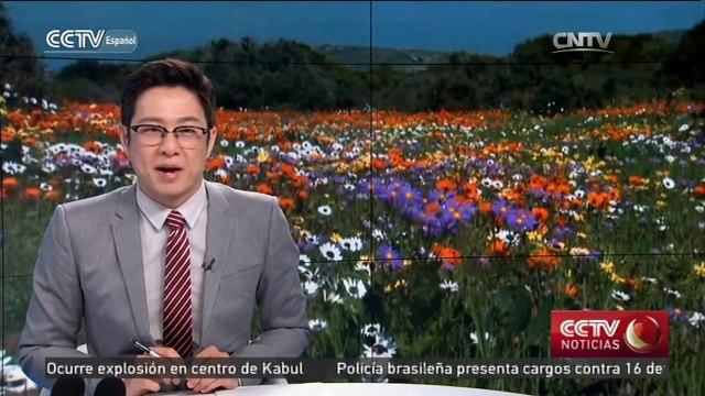 Turistas viajan a Sudáfrica para ver espectáculo de flores silvestres