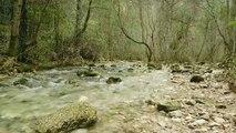 sonidos de la naturaleza /agua /pajaros /musica /relajacion.