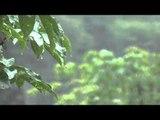 Soft Rain Music: Healing Ambient Sounds, Deep Sleep Meditation Music, Relaxation Spa Music ♫♫♫