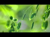 Classical Piano Music for Studying and Concentration, Study Music, New Age Relaxing Piano Music ♫♫♫