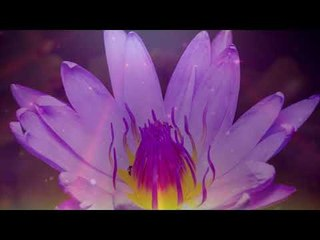 Calming & Peaceful Sunset Music, Relaxing Instrumental Piano Music - Relax Meditation Club