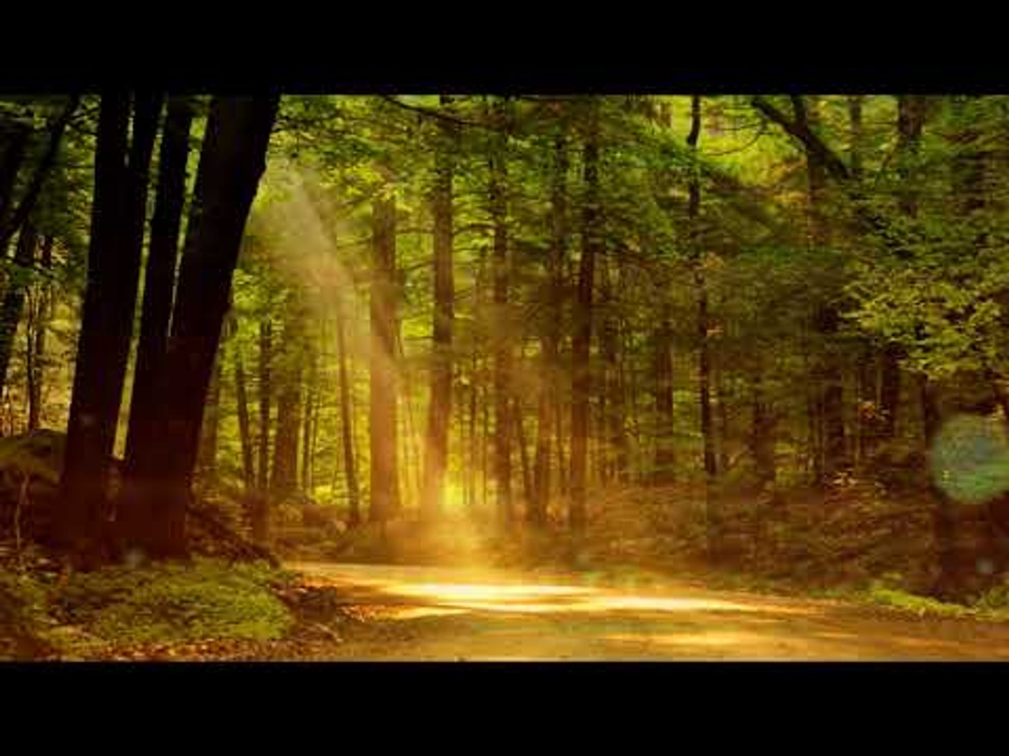 Indian Flute Music: Relaxation Music, Soothing Music, Calming Music, Yoga Music, Healing Music
