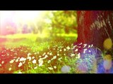 Relaxing Nature Sounds - Soothing Meditation Music, Calming Birds Sounds, Relax Music