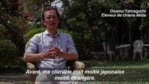 Japon: les chiens Akita de plus en plus populaires à l'étranger