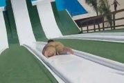 Ce gars va etre mis en orbite : glissade sur toboggan à eau impressionnante