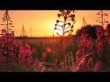 Sons de la nature relaxante musique, la méditation du matin avec oiseau chantant musique