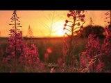 Paisible matin Musique Relaxante Piano avec Sons de la Nature