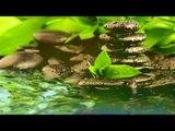 Musique de méditation Zen: Relaxation Musique Zen, Relax Music for Inner Peace, Calming Music