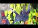 Musique relaxante avec des sons de la nature - La forêt sonne et la pluie sonne Musique relaxante