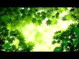 Soft, Meditation Deep Sleep Music: Inner Peace Music, musique relaxante, musique de repos
