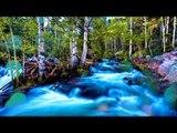 Musique relaxante avec des sons de la nature - Belle cascade, la nature sonne pour l'étude