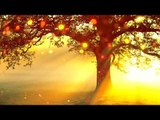 Sunset Relaxing Piano Music, Healing Music for Study, Concentration, Stress Relief, Mind Relaxation