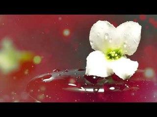 Musique Zen - Soulagement du stress, Musique de paix intérieure, Musique apaisante