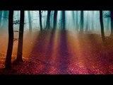 Musique celtique relaxante, Brise du soir, Forêt d'automne - Musique relaxante