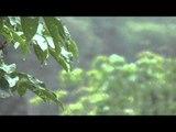 Weiche Regen Musik: Heilende Klänge, tiefen Schlaf Meditation Musik, Entspannung Wellness Musik