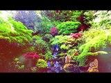 Расслабляющая успокаивающая музыка - внутренний мир, музыка релаксации в лесу, медитация