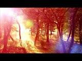 3O Mins of Healing Meditation Musik: Entspannende Musik, beruhigende Musik, beruhigende Musik
