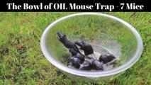 Un des pièges à souris les plus efficaces et qui ne les blesse pas : Un saladier et de l'huile
