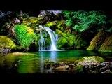 Música relajante - cascada de los sonidos, selva tropical, los pájaros Chirping