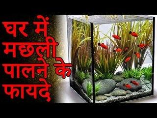 घर में मछली पालने के फायदे | Amazing facts
