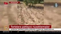 Terör örgütü PYD'nin Afrin'de tarlalalara tuzakladığı bombalar bulundu