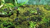 Les plantes carnivores au Palais de la découverte