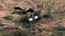Baboon vs Crocodile Revenge - Animals Attack Compilation  Lion  Leopard  Crocodile  Snakes Part 1