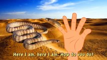 Finger Family Snake | cartoon Wild Animals Rhymes l | Nursery Rhymes For Children