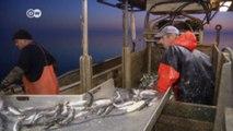 صيد الأسماك في أوروبا