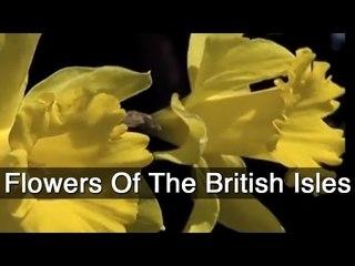 Flowers Of The British Isles