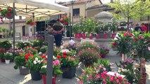 Hautes-Alpes : succès relatif pour la foire aux plants de Monêtier Allemont