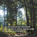 Sylvothérapie : ces arbres qui nous font du bien