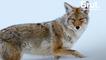 États-Unis : plus d'1 million d'animaux tués chaque année